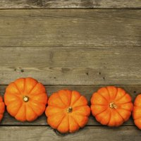 Mini Pumpkin Decorating Ideas With Pictures Ehow