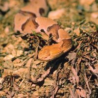 How To Get Rid Of Baby Copperhead Snakes Ehow