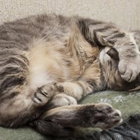 How To Treat A Cat S Worms Ehow