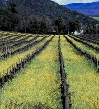 Nestled between San Francisco, Santa Rosa and Sacramento, Napa is known for its wine-growing economy, which brings in wine-loving tourists from ...