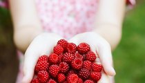 The Benefits of Raspberries