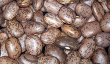 Pinto Beans Nutrition Facts