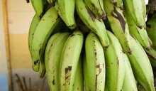 Nutrition in a Plantain