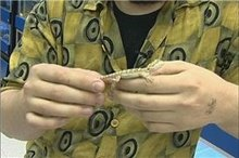 how to take care of a bearded dragon video