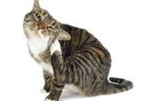 Cat Health   Cats   Page 6   eHow