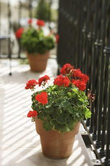 Potted plants can brighten your condo landscaping.