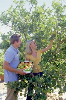 Pick ripe fruit off the tree to prevent attracting insects.