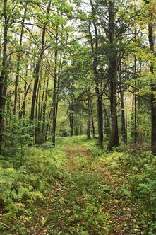 Foresters help preserve natural resources.