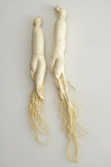 Ginseng is identified by its habitat, growth and root characteristics.