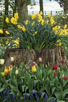 Hollowed out stumps make excellent planters.