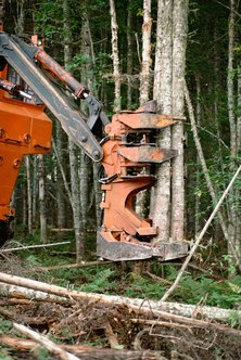 The feller buncher is a specialized heavy piece of equipment capable of harvesting 1,200 trees per day.