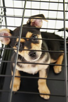Dog kennel businesses provide lodging and care for dogs.