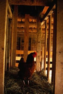 One chicken can produce 2 cubic feet of compost per year.