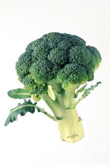 Three common conditions can cause broccoli to yellow in the garden.