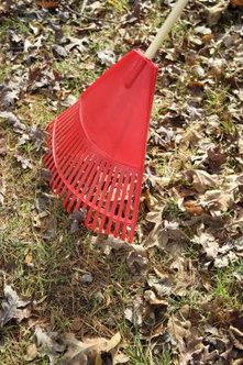 Leaf rakes remove most of the leaves on the lawn, preventing leaf layers from smothering the lawn.