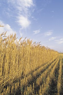 Markets for commodities such as wheat are examples of market systems that approach the perfect competition model.