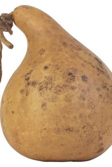 Most large gourds are grown for ornamental purposes.