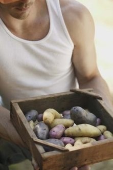 Colorful fingerling potatoes add variety to the home garden.