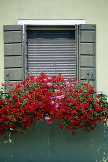 Add curb appeal to your home with a window box planter.