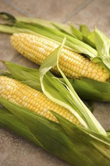 Sweet corn does best with multiple fertilizer applications.