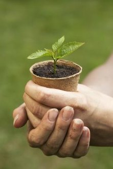 Potted plants benefit from additions of coconut coir to the soil.