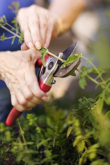 Large-handled tools make gardening easier with arthritis.