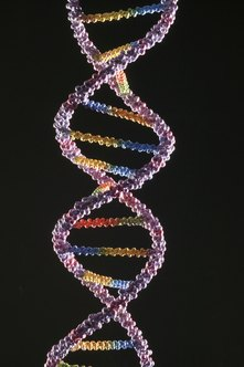 Genetics is the study and manipulation of genes encoded in the DNA of all living things.