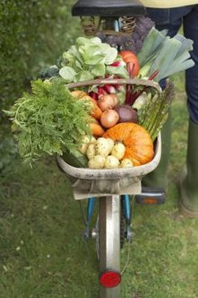 Choosing the right size for your garden can lead to better harvests.