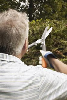 Some shrubs may need the occasional pruning to retain their attractive shape.