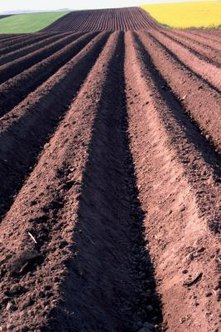 Turning plows aerate the soil and provide a clean seed bed for germination.