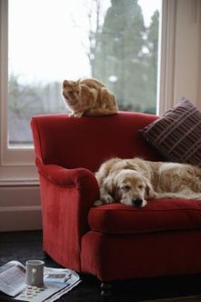 Regular deodorizing removes pet odors from a sofa.