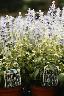 how to choose the right plants for your garden