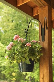 Seed geraniums fill pots with lovely mixtures of foliage and color.