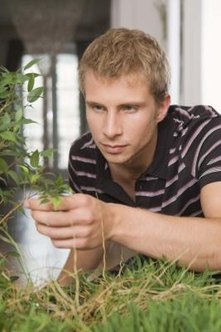 Inspect your plants closely to detect bugs or mold.