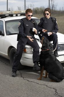 If you like working with animals, your career goal might be to join a canine unit.