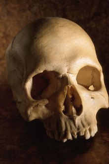 Forensic anthropologists develop in-depth knowledge of skulls and other skeletal evidence.