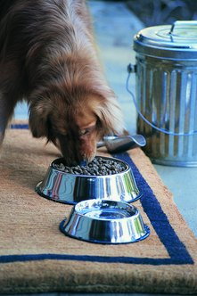 Feeding pets is a key aspect of pet sitting.