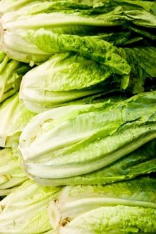 Tall stalks with deep green leaves denote a lettuce head ready for harvesting.