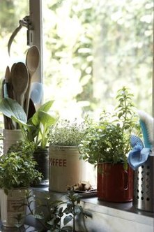Small Slow Growing Indoor Plants For Windowsills Home