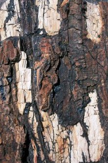 Damaged tree bark should be treated with care.