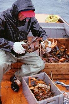 Lobstermen catch, measure and package lobsters, often in inclement weather.