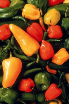 Maintain the proper distance between pepper varieties to avoid cross-pollination.