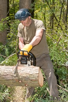 Loggers use powered tools to perform their jobs.