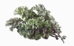How Nutritious Is Raw Kale?