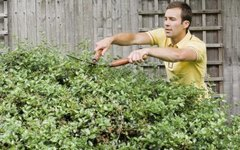 Landscape Shrubs for South-Facing Exposure