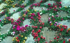 How to Put Flowers Next to Your Walkway