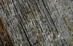 How to Repair Dry, Rotted Wood