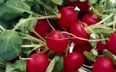 What to Put in Garden to Prevent Worms in Radishes
