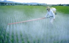 The Effects of Synthetic Fertilizers