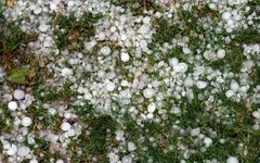 How to Protect Your Garden from Summer Hail